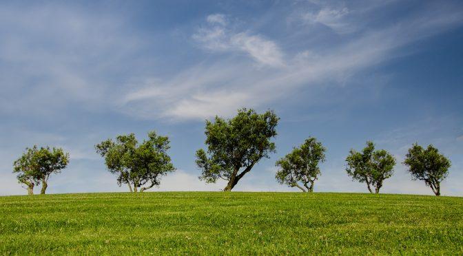 CDU regt Umsetzung der Klimaschutzinitiative an!