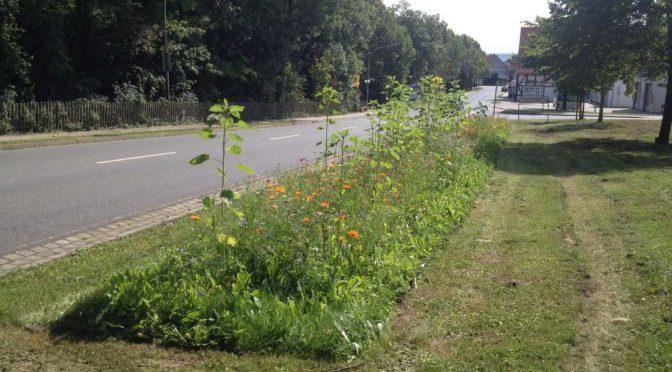 Blumenwiese in voller Blütenpracht am Ortseingang Schladen