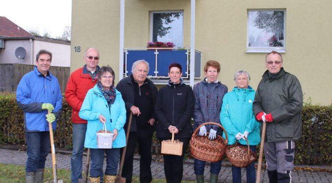 CDU Schladen steckt Krokuszwiebeln